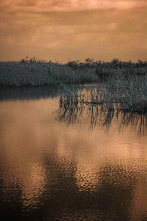 Infrared Photography in Florida Swamps